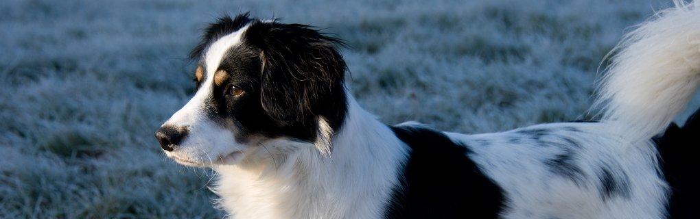 Pes Standa